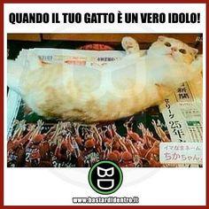 #bastardidentro #perfettamentebastardidentro #gatto #giornale www.bastardidentro.it