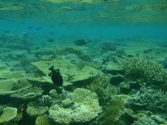 Lily Beach Resort & Spa: The Local Reef.