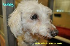 Hi, I am a sweet little dog.  I am 9 years old but I have a lot of love to give.  I can't wait to go to my forever home, would that be with you?