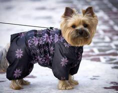 Hello friends! Have a nice day! Asuka the #Yorkie #yorkshireterrier #yorkeezz #yorkiediaries #yorkielife #yorkiesarethebest #instayorkie #pet #dog #petstagram