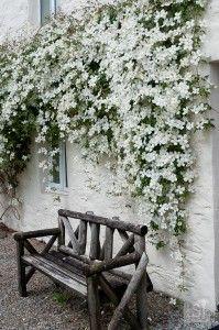 Flower laden cottage at Melfort Village, Scotland. (via @LiveShareTravel)