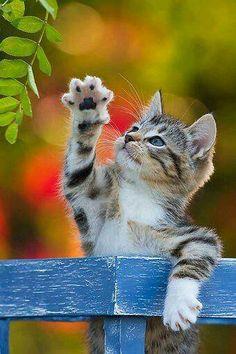 Kitty :-)