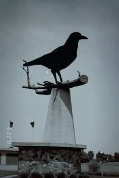 "I absolutely love crows <3   ""World's Largest Crow""    Belgrade, Minnesota"