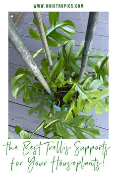Are you wondering about the best way to support your indoor plants? Whether you want to fix a leaning houseplant, need a support like a trellis or moss post for a climbing plant, or want a creative, stable support for your prized specimens, I have 7 amazing solutions for you!