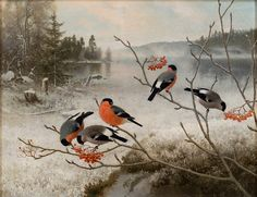 Ferdinand von Wright Bullfinches in Winter Landscape - The Largest Art reproductions Center In Our website. Low Wholesale Prices Great Pricing Quality Hand paintings for saleFerdinand von Wright A4 Poster, Poster Prints, Dream Pictures, Jesus Painting, Bullfinch, Bird Illustration, Bird Drawings, Winter Art, Vintage Artwork