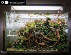 Amazing Aquascape Freshwater Gallery Ideas 26