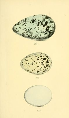 v. 7, c. 1 - Coloured illustrations of British birds, and their eggs - 1842 - Biodiversity Heritage Library