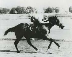 Jet Deck was one of the greatest quarterhorse racing horses of all times.  He was at the height of his prime as a breeding stallion in 1971,when someone snuck onto the ranch and poisoned him with a massive dose of barbiturates.