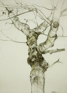 Drawings by Miguel Angel Oyarbide, artist from Madrid, Spain. Tree Sketches, Drawing Sketches, Art Drawings, Pencil Drawings, Horse Drawings, Life Drawing, Animal Drawings, Drawing Ideas, Sketching