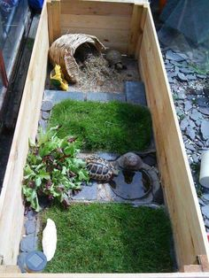 Most up-to-date Images Reptile Terrarium turtle Tips No doubt that will using a family pet may bring uncounted fulfillment to someone's life. Tortoise House, Tortoise Habitat, Tortoise Table, Baby Tortoise, Sulcata Tortoise, Tortoise Terrarium, Turtle Terrarium, Reptile Terrarium, Turtle Cage