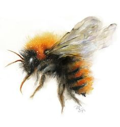 Bumble Bee Watercolor Archival Print – Mira Guerquin Watercolors