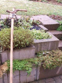 Stock für den Garten aus Rebenholz und Birke