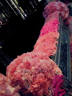 Pink carnations.