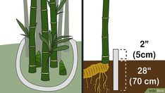 3 Ways to Kill Bamboo - wikiHow Bamboo Stalks, Bamboo Leaves, Bamboo Barrier, Goat Fence, Clumping Bamboo, Get Off My Lawn, Invasive Plants, Bamboo Crafts, Bamboo Garden