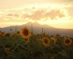 golden sunset beyond the mountains