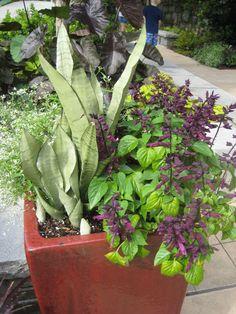 Tips for a Summer Garden