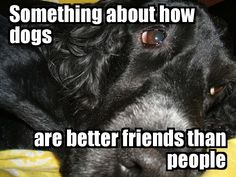 I hear they are, though. Dogs don't let you down