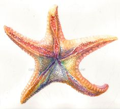 Rainbow Starfish art print by carlationsart on Etsy, $5.00