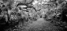 Florida Collection – Clyde Butcher | Black & White Fine Art Photography