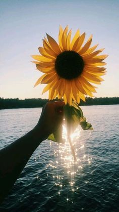 This is why I trust sunflowers are beautiful than *roses* - Sunflower - Aesthetic Iphone Wallpaper, Aesthetic Wallpapers, Sunflower Pictures, Sunflower Quotes, Sunflower Wallpaper, Jolie Photo, Phone Backgrounds, Summer Backgrounds Tumblr, Pretty Pictures