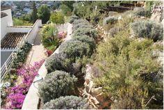 Lista de plantas y arboles del Mediterráneo.  Jardín mediterráneo.