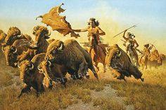 Chasing buffalo