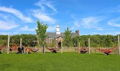 Tranquil Hammock Grove on Governors Island