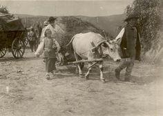 BU-F-01073-1-08739 Refugiaţi în drum spre casă. Mărăşeşti, 1917.07.12 (niv.Document) Sheep Pig, Farm Yard, Vintage Pictures, Wwi, Cattle, First World, Romania, Street Photography, Drum