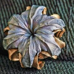Closeup of bullet flower born from hollow point bullets fired underwater. From Vuurwapenblog.
