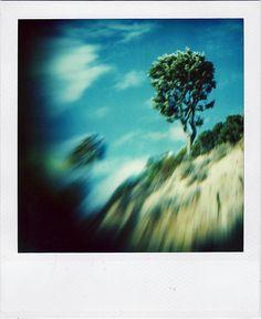 Beautiful Polaroid