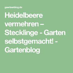 Heidelbeere vermehren – Stecklinge - Garten selbstgemacht! - Gartenblog