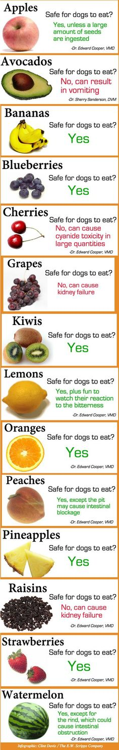fruits and veggies-dogs
