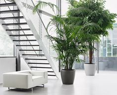 Impressive Tricks Can Change Your Life: Artificial Plants Indoor Palm Trees artificial flowers wreath.Artificial Garden Tips artificial plants window. Artificial Plants And Trees, Artificial Plant Wall, Artificial Flower Arrangements, Artificial Flowers, Indoor Palm Trees, Indoor Palms, Plants Indoor, Water Plants, Cool Plants