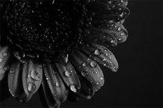 Las mejores   Fotografias blanco y negro