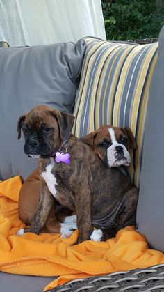 """See our web site for more info on """"Boxer puppies"""". It is actually an exceptional place to get more information. Cute Puppies, Cute Dogs, Dogs And Puppies, Doggies, Dogs 101, Awesome Dogs, Boxer And Baby, Boxer Love, Pictures Of Boxers"""