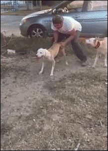 Spiderdog does a 12 foot wall climb. [video] >>> pits are amazing dogs.  People who care to give them something to do other than fight... they're pretty amazing, too.