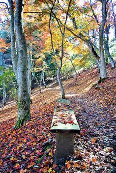修善寺自然公園 November 27, 2014