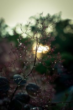 I love early morning moments when the world is still rubbing sleep from it's eyes and cool sparkling dew drops drip from where they cling.  ~Charlotte (PixieWinksFairyWhispers)