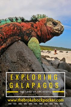 This amazing travel guide will help you explore the mystery land Galapagos on a budget. A land with the most unique ecosystem and the strangest animals. http://www.southamericaperutours.com/southamerica/12-days-wonders-of-machu-picchu-and-galapagos.html