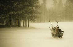 Travel by Sled and Reindeer, Finland