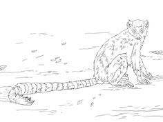 lemur coloring page 100 images coloring pages lemur sits on