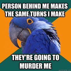 Gotta love Paranoid Parrot - Imgur