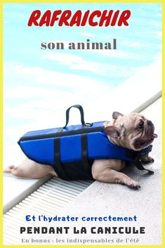 Dog Breeds For Kids Can French Bulldogs Swim? Tips to Help Them. TAG a friend.Dog Breeds For Kids Can French Bulldogs Swim? Tips to Help Them. TAG a friend French Bulldog Puppies, French Bulldogs, English Bulldogs, French Dogs, Funny French, Homemade Dog Toys, Dog Grooming Shop, Dog Smells, Son Chat