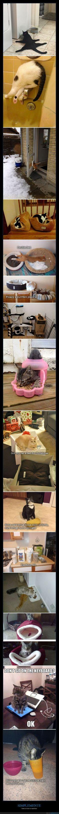 Los gatos siguen sus propias normas de la lógica - Gatos en todo su esplendor