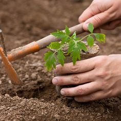 Gardening Tips for Beginners: 3 Growing Mistakes to Avoid (Video) - Organic Gardening - MOTHER EARTH NEWS
