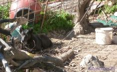 Chain Dogs in the Corona Crisis Wet Dog Food, Crete, The Locals, Best Dogs, Cats And Kittens, Horses, Pictures, Animals, Chain