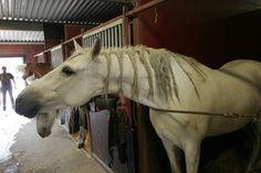 Apassionatas hästar vilar ut i Mantorp 060511