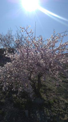 Konya/Sille