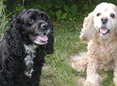 My dogs Roxy and Chloe. Marcia, Bend, Oregon. 10/5/13.