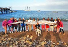 18-foot-long Oarfish discovered